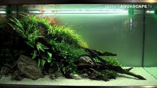 The Art Of The Planted Aquarium 2015 - Eheim (xl) Category, Part 6