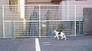 少し前に駐車場の奥に猫を追いかけて行きました。 それ以来、ダッシュで...