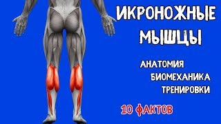 ИКРЫ. 10 Фактов. Биомеханика, Тренировки, Анатомия.