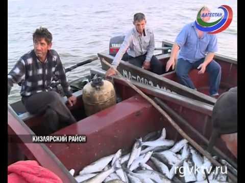 Рыбаки поселка Старый Терек Кизлярского района терпят колоссальные убытки
