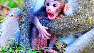 Video newborn monkey Bela, Beautiful activity newborn monkey Bela, Cute baby monkey!