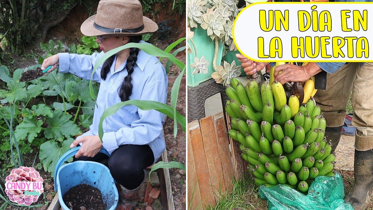 Abonando la huerta y cosechando bananos │Candy Bu