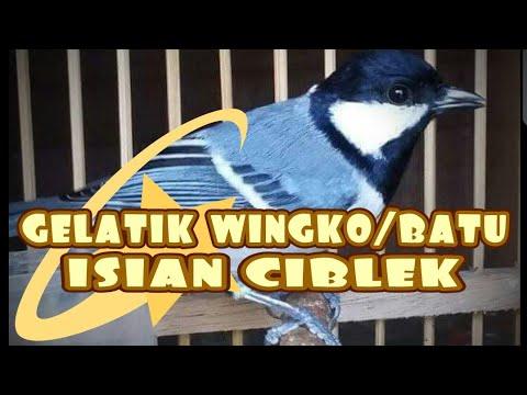 GELATIK WINGKO/BATU ISIAN CIBLEK SUARA TEMBUSS Mp3