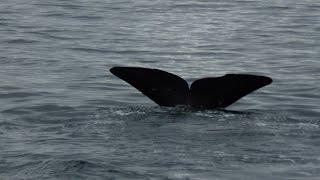Andenes Whale Safari