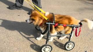 9/29 4輪車椅子試乗の様子です.