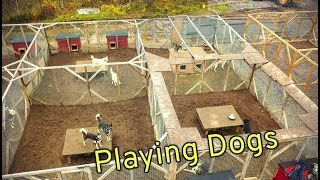 Dogs playing in the kennel