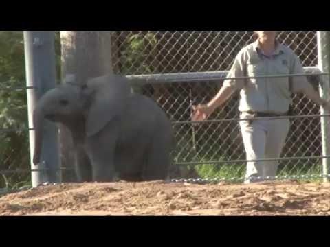 arizona's-first-baby-elephant,-born-in-tucson,-receives-name