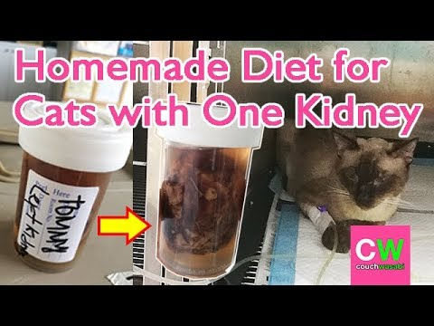 Homemade Diet For Tommy 🐱 Cat With Kidney Failure (DAILY VLOG # 38) | Couchwasabi