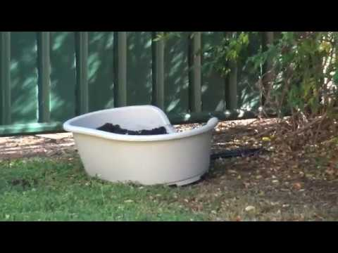 Tenterfield Terrier & Jack Russell memorial garden RIP