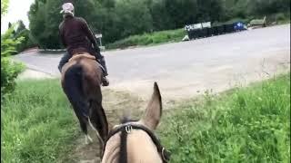 Лошадь лучший тренажёр здоровья