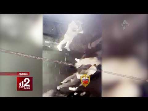 Откусил бизнесмену нос во время драки   Видеонаблюдение