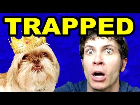 TRAPPED in MY DOG'S COMMERCIAL: Ting