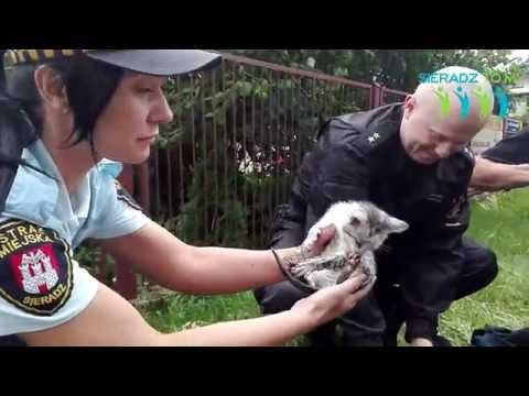 排水溝の中に入って出れなくってしまった子猫を救出する映像が話題に。wwwww