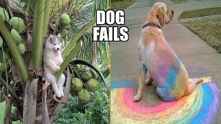 Funniest Dog Fails Ever