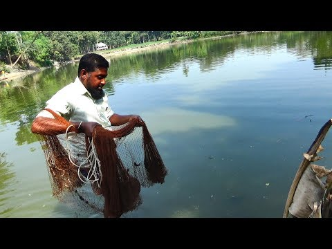 Net Fishing | Catching Fish With Cast Net | Net Fishing in the village (Part-344)