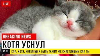Фото Приколы с котами. СРОЧНЫЕ КОТОНОВОСТИ | Мемозг #404