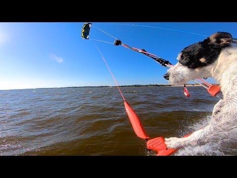 The Kitesurfing Dog