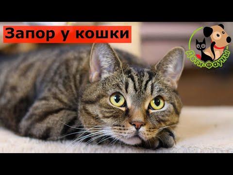 У кошки запор, что можно сделать самостоятельно в домашних условиях?