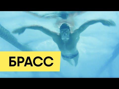 Как правильно плавать брассом видео на русском для начинающих