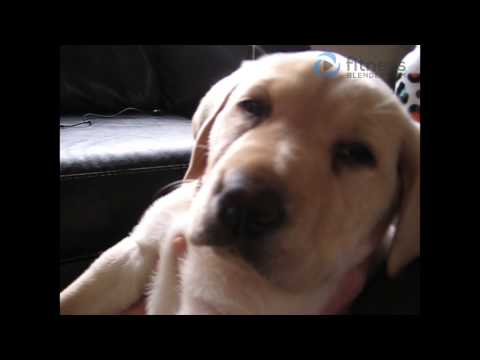 Puppy Meets World