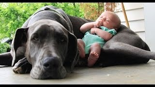 Duże Psy Bawiące Się Dzieci 2016