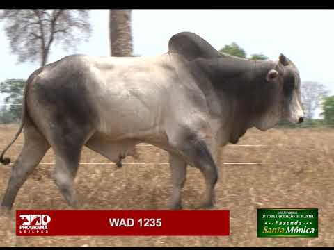 LOTE 06 - WAD 1235