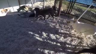 Group Dog Socialization - Utah Dog Trainer