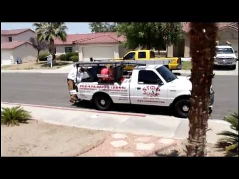 German Cockroach Pest Control in Las Vegas from Stop Buggn