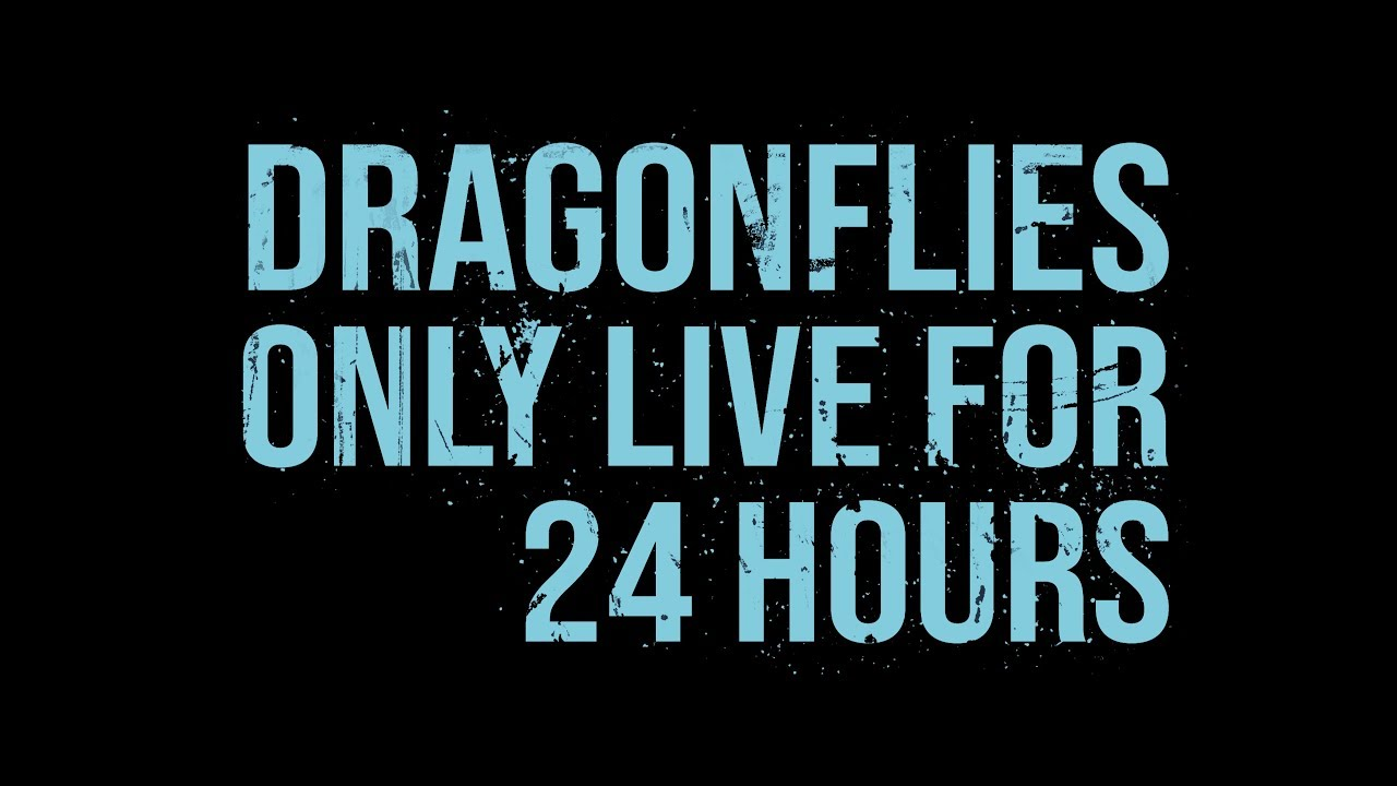 Dragonflies only live for 24 hours (2018) Full Trailer