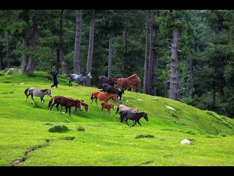 Most Adorable Pictures Of Nature From Pakistan
