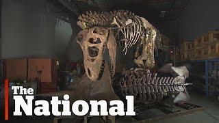 T. rex reconstruction