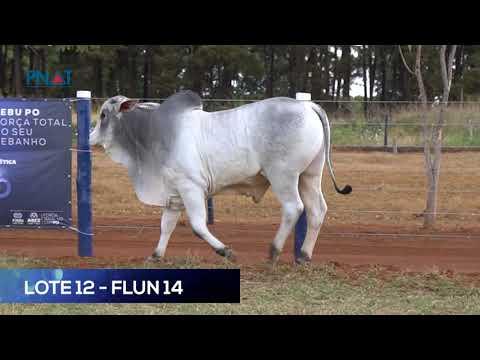 LOTE 12 - FLUN14 - NELORE