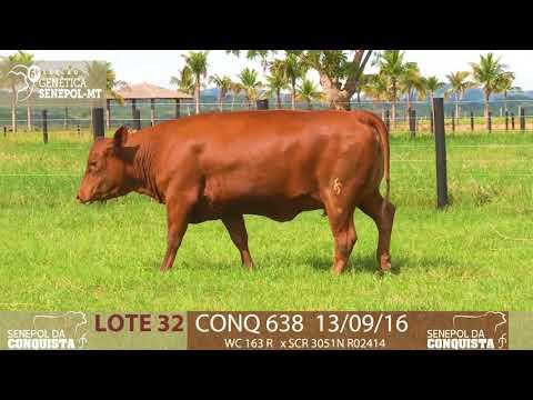 LOTE 32 CONQ 638