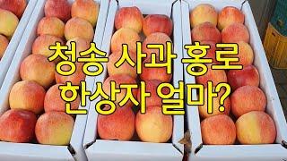 홍로 사과맛이 달달하다는거 아세요? #경북 #청송 #주…
