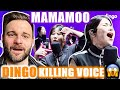 Reacting to MAMAMOO KILLING VOICE with Perfect HARMONY | Dingo! | VOCAL HEAVEN! 🤯😍