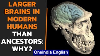 Human brains originated 1.7 million years ago in Africa | Oneindia News