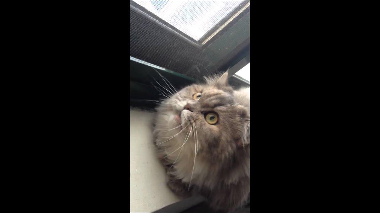 Youtube Cat Eye Tutorial: Cat Tripping On A Bird