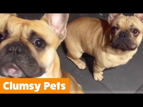 Cute Clumsy Pets | Funny Pet Videos