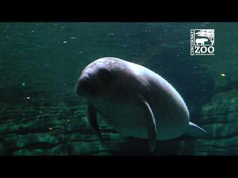 Volunteer Divers Manatee Springs - Cincinnati Zoo