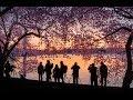 Washington Cherry Blossoms 360