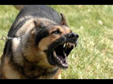 Dog Barking - Ringtone [With Free Download Link]