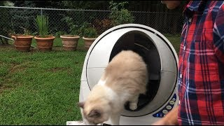 Truly Amazing!!! Litter-Robot III Open Air Automatic Self Cleaning Litter Box  - A Must Have!
