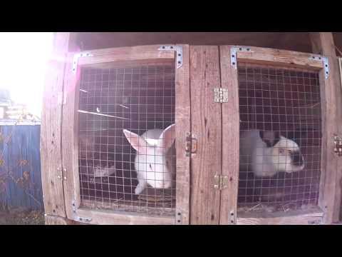 Стимулятор охоты для кроликов