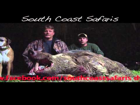 MONSTER HOG KILLED!! Wild Boar Hunting In Alabama With South Coast Safaris