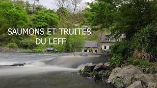 Video La Remontée des Saumons du Leff! download MP3, 3GP, MP4, WEBM, AVI, FLV Agustus 2018