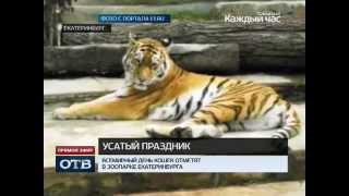 Всемирный день кошек отметят в зоопарке Екатеринбурга