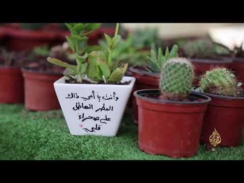 هذا الصباح-صبارة.. مشروع طامح لمهندسة من غزة  - نشر قبل 2 ساعة