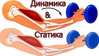 видео Динамическая и статистическая работа мышц