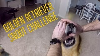 Golden Retriever Snoot Challenge Epic Fail | Oshies World