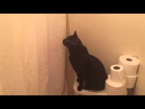 Cat is Concerned when Owner Sings in the Shower